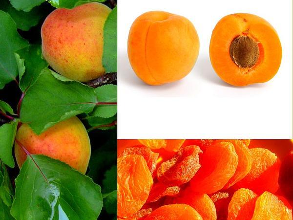 Apricot (Prunus Armeniaca) http://www.sagebud.com/apricot-prunus-armeniaca
