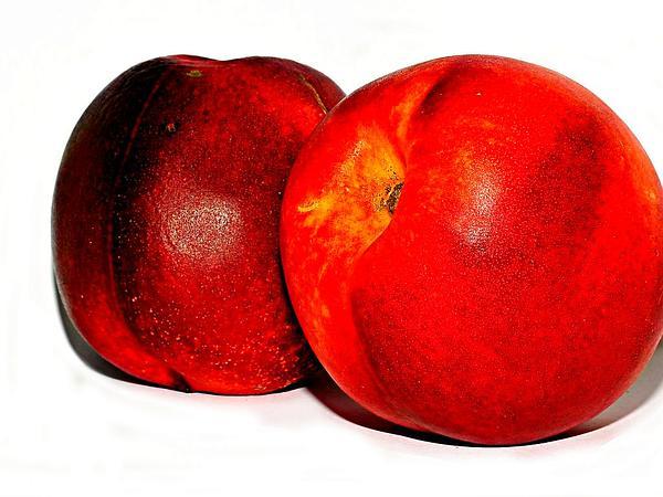Peach (Prunus Persica) http://www.sagebud.com/peach-prunus-persica