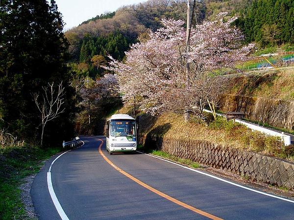 Plum (Prunus) http://www.sagebud.com/plum-prunus