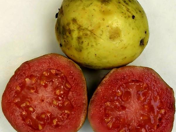 Guava (Psidium) http://www.sagebud.com/guava-psidium/