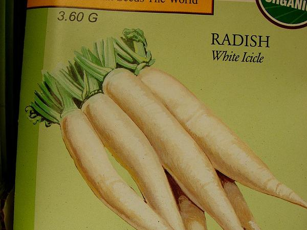 Radish (Raphanus) http://www.sagebud.com/radish-raphanus