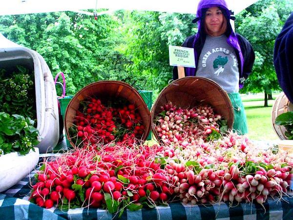 Cultivated Radish (Raphanus Sativus) http://www.sagebud.com/cultivated-radish-raphanus-sativus/