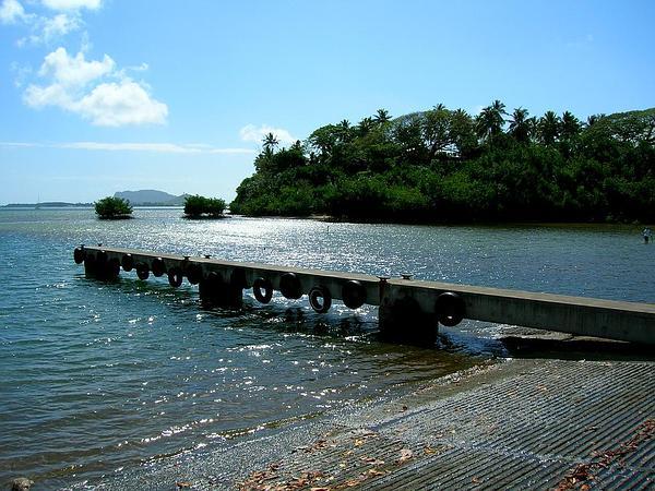 Mangrove (Rhizophora) http://www.sagebud.com/mangrove-rhizophora/