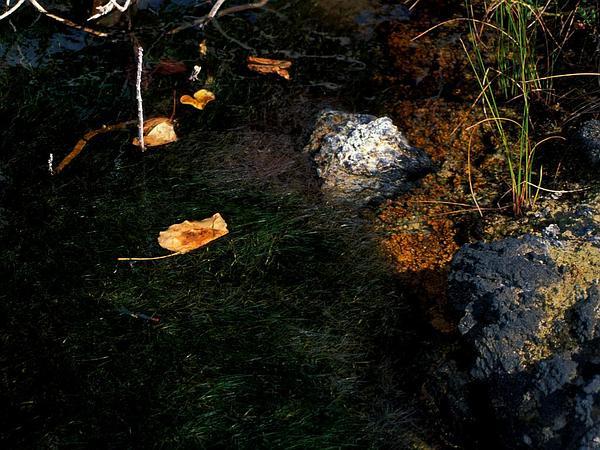 Widgeonweed (Ruppia) http://www.sagebud.com/widgeonweed-ruppia