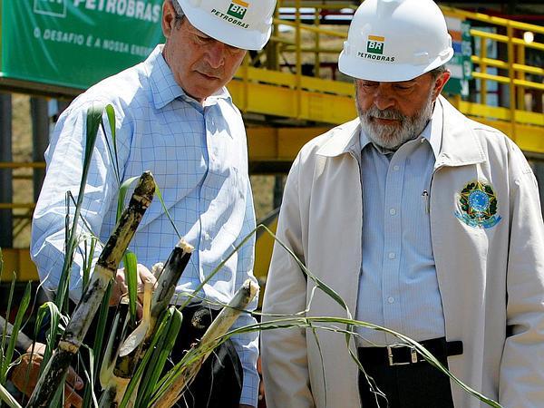 Sugarcane (Saccharum) http://www.sagebud.com/sugarcane-saccharum