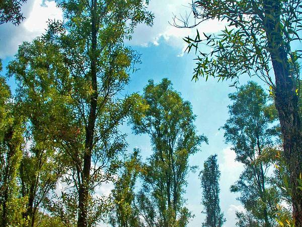 Willow (Salix) http://www.sagebud.com/willow-salix/
