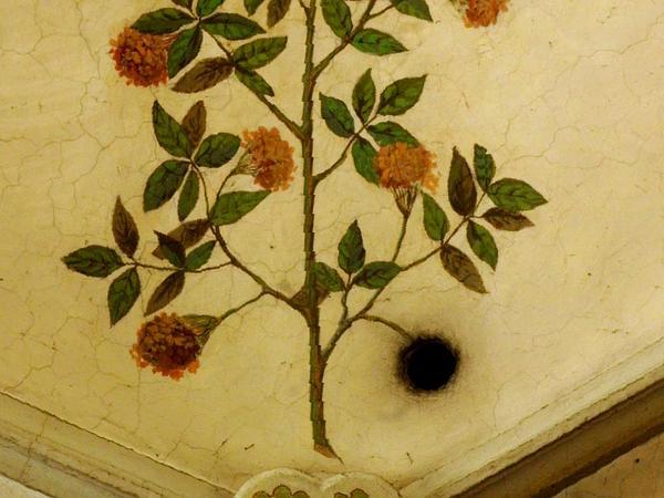Elderberry (Sambucus) http://www.sagebud.com/elderberry-sambucus/