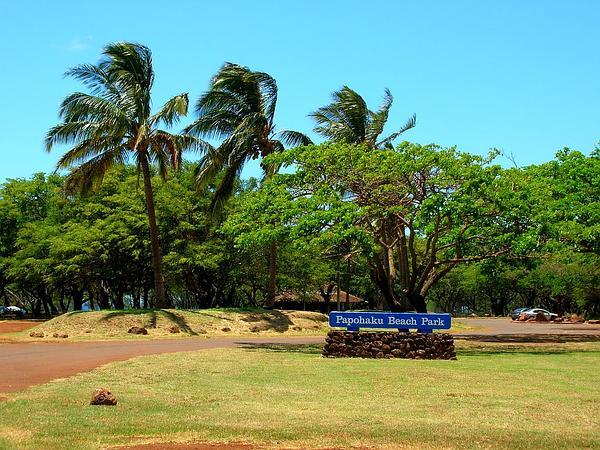 Raintree (Samanea Saman) http://www.sagebud.com/raintree-samanea-saman/