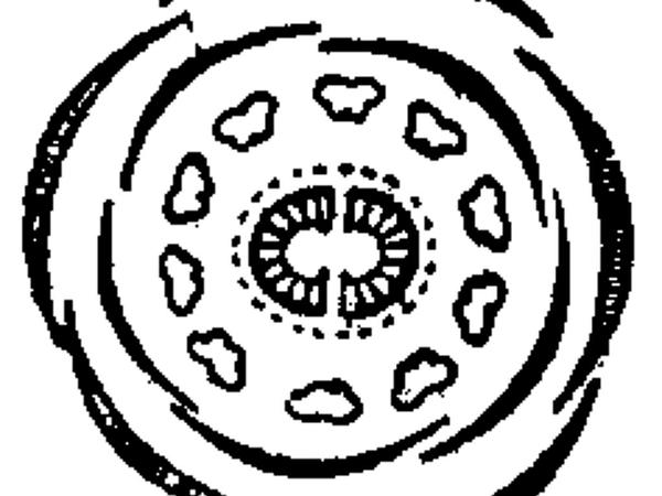 Rueleaf Saxifrage (Saxifraga Tridactylites) http://www.sagebud.com/rueleaf-saxifrage-saxifraga-tridactylites