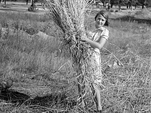 Cereal Rye (Secale Cereale) http://www.sagebud.com/cereal-rye-secale-cereale
