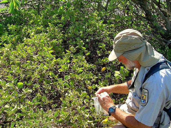 Nelson's Horsenettle (Solanum Nelsonii) http://www.sagebud.com/nelsons-horsenettle-solanum-nelsonii