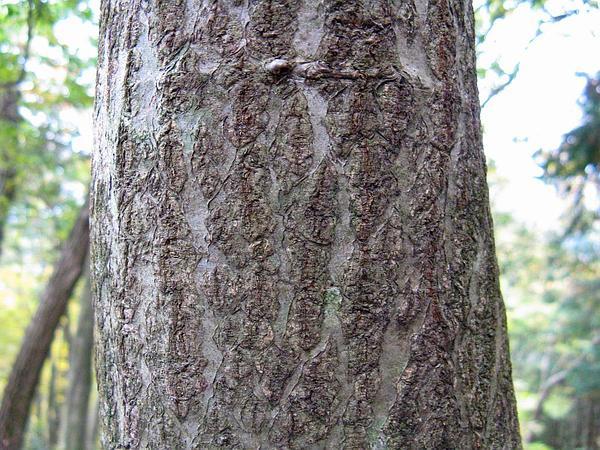 Mountain Ash (Sorbus) http://www.sagebud.com/mountain-ash-sorbus/