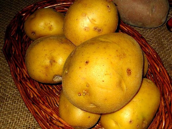 Irish Potato (Solanum Tuberosum) http://www.sagebud.com/irish-potato-solanum-tuberosum/