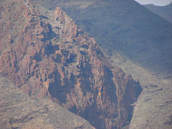 Zulu Giant (Stapelia Gigantea) http://www.sagebud.com/zulu-giant-stapelia-gigantea