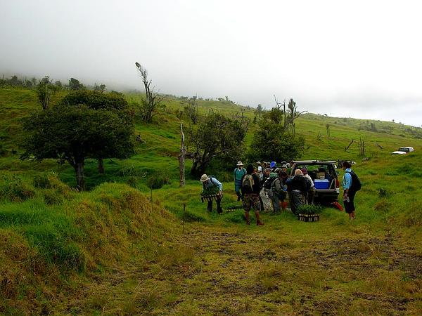 Hawai'I Roughbush (Streblus Pendulinus) http://www.sagebud.com/hawaii-roughbush-streblus-pendulinus/