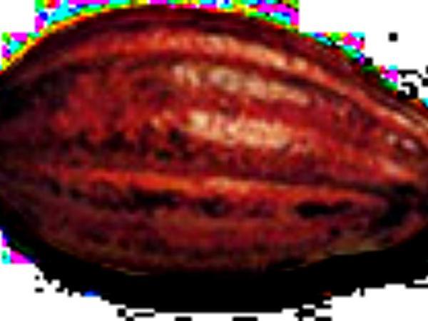 Theobroma (Theobroma) http://www.sagebud.com/theobroma-theobroma