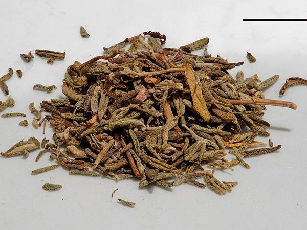 Thyme (Thymus) http://www.sagebud.com/thyme-thymus
