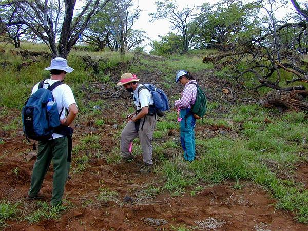 Spiked Bur Grass (Tragus Berteronianus) http://www.sagebud.com/spiked-bur-grass-tragus-berteronianus/