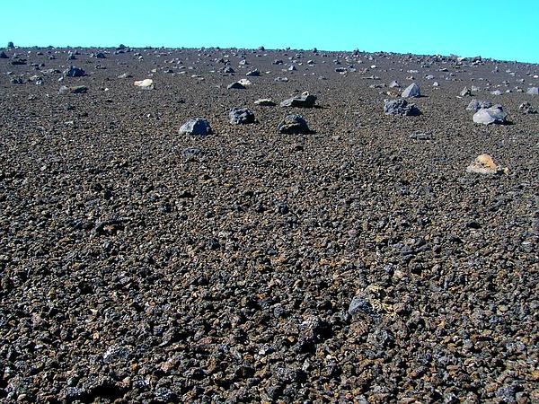 Pili Uka (Trisetum Glomeratum) http://www.sagebud.com/pili-uka-trisetum-glomeratum