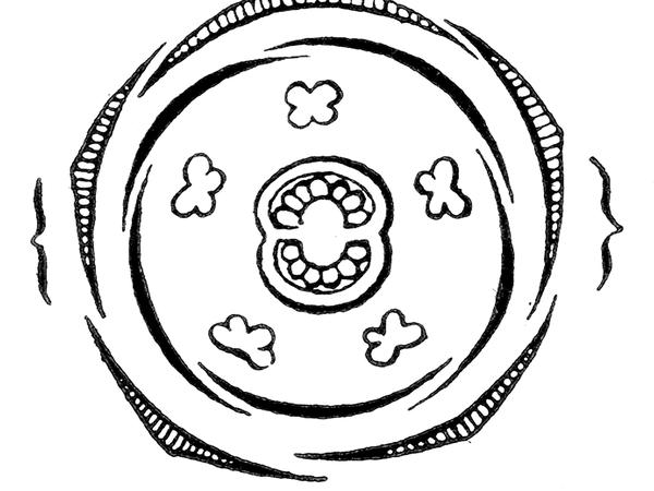 Mullein (Verbascum) http://www.sagebud.com/mullein-verbascum