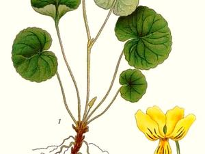 Arctic Yellow Violet
