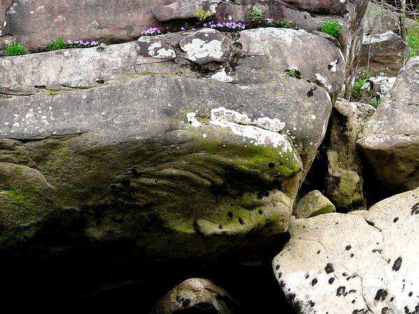 Birdfoot Violet (Viola Pedata) http://www.sagebud.com/birdfoot-violet-viola-pedata/