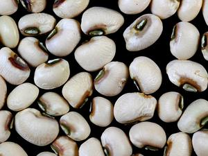 Blackeyed Pea