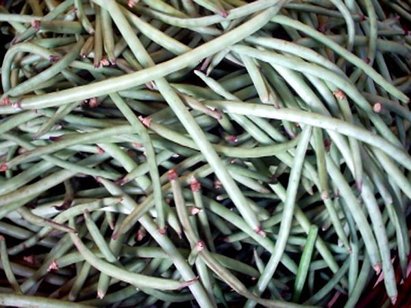 Blackeyed Pea (Vigna Unguiculata) http://www.sagebud.com/blackeyed-pea-vigna-unguiculata