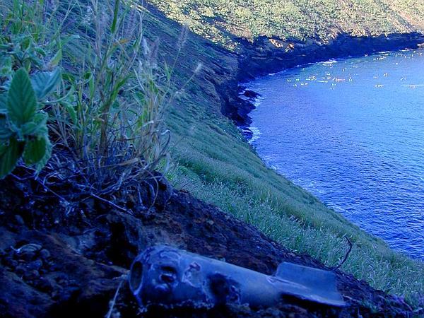 Uhaloa (Waltheria Indica) http://www.sagebud.com/uhaloa-waltheria-indica