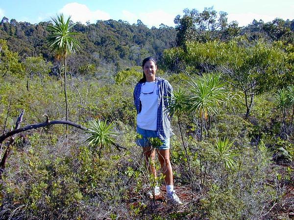 Iliau (Wilkesia) http://www.sagebud.com/iliau-wilkesia/