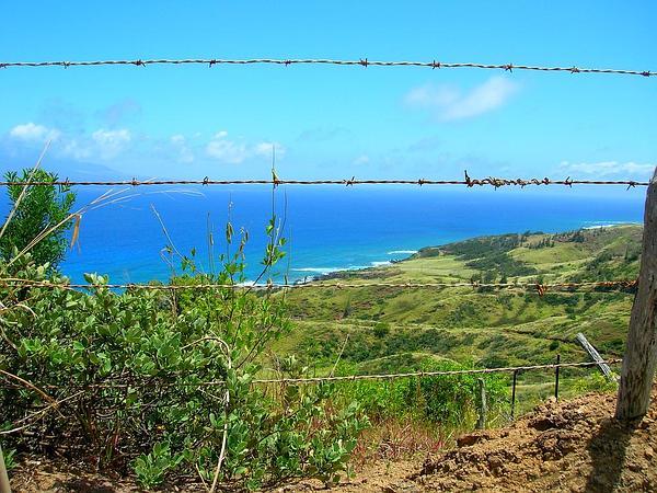 Hillside False Ohelo (Wikstroemia Uva-Ursi) http://www.sagebud.com/hillside-false-ohelo-wikstroemia-uva-ursi/