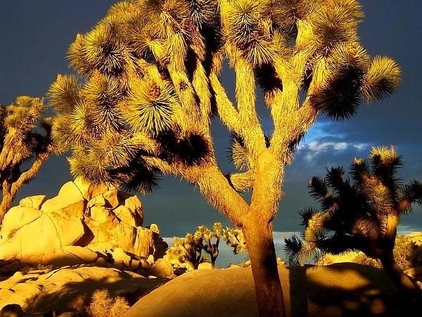 Yucca (Yucca) http://www.sagebud.com/yucca-yucca/