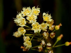 Meadow Deathcamas