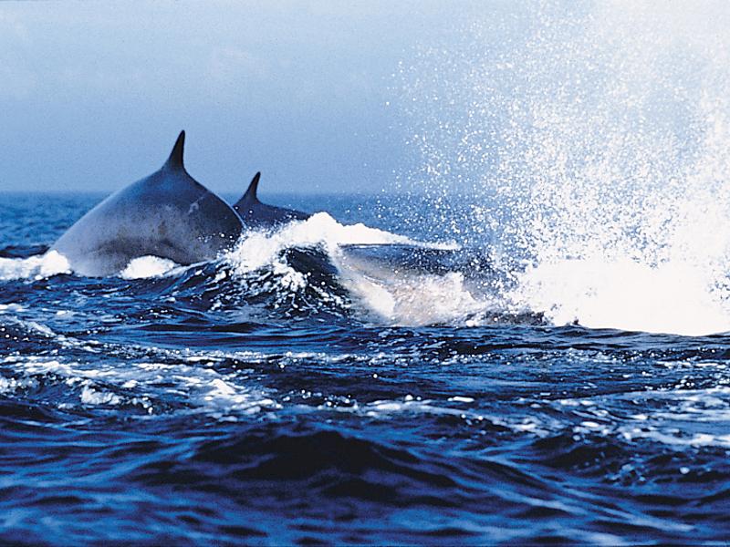 Hotel tadoussac   baleine   tdrs 016 big