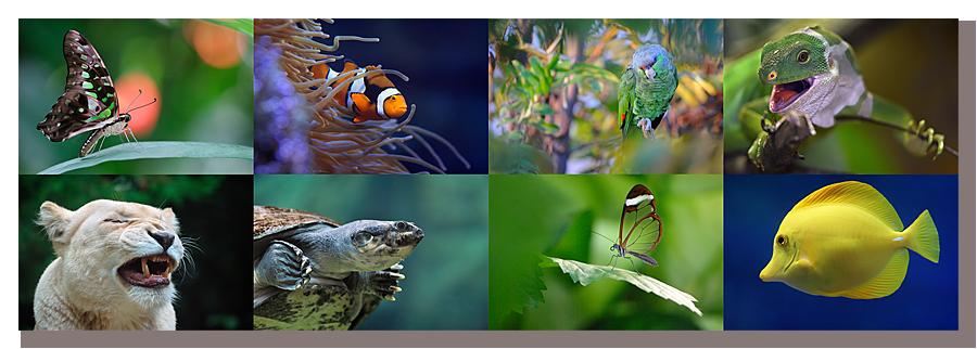 zoo_parc_animalier_serre_tropicale_aquarium_bd.png