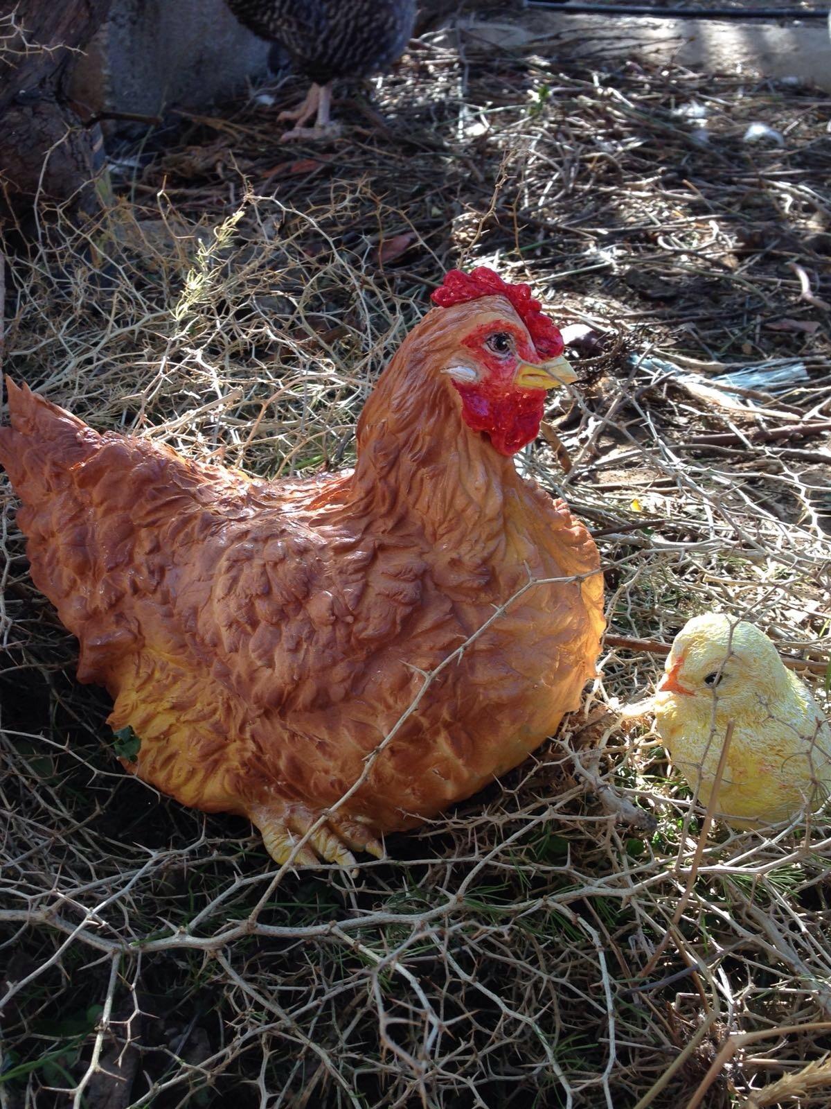 Animal-Rights-Maria-Teresa-Gil-Layunta-Chicken.jpg#asset:13726