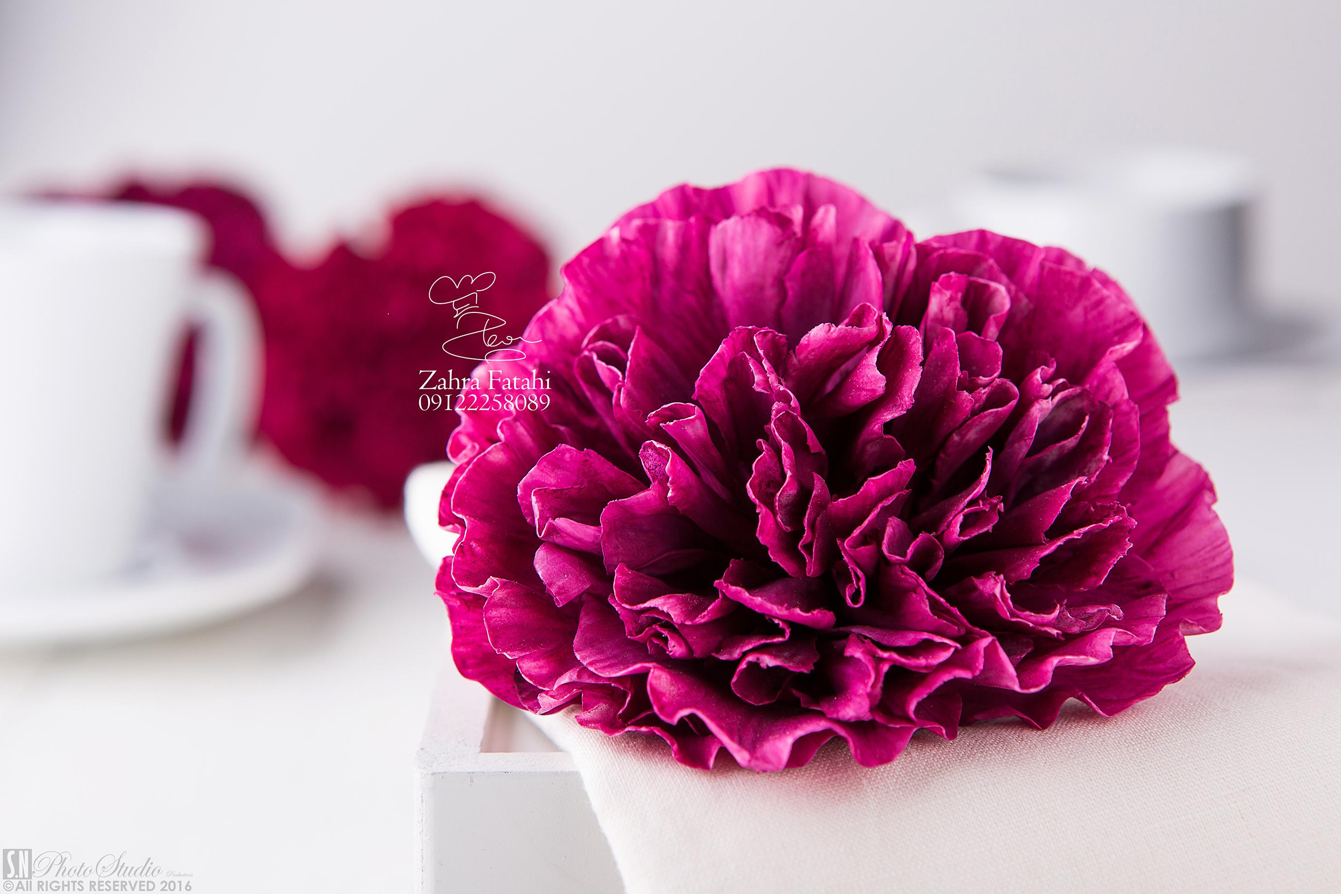 Dark Pink carnation