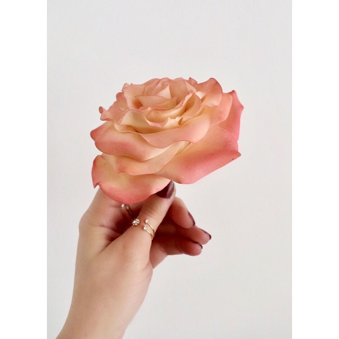 Annissa Cheyne Frosted Cake Design Sugar Flowers