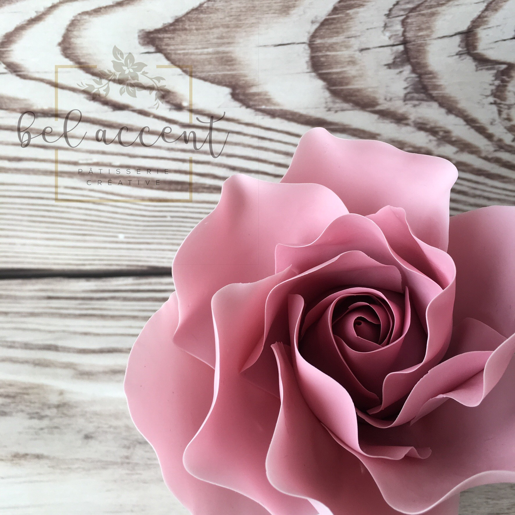 Pink Sugar Rose