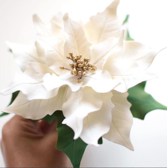 Marian Poinsettia