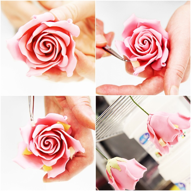 Medium-Rose-6.jpg#asset:15199