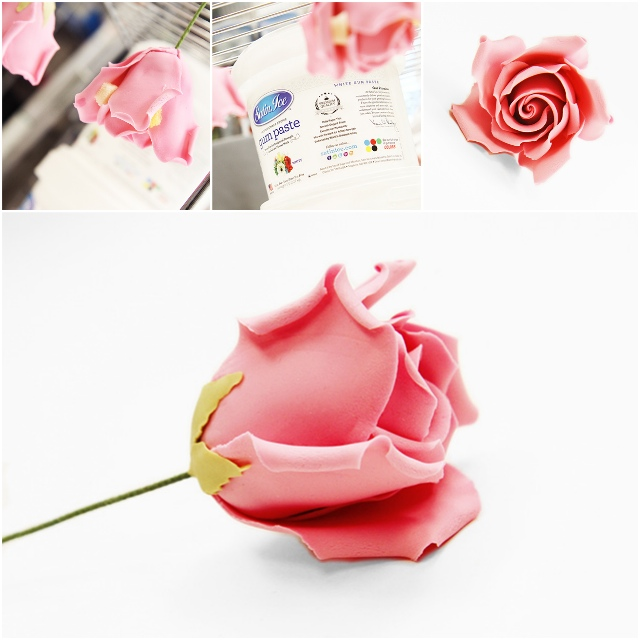 Medium-Rose-7.jpg#asset:15200