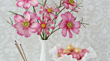 Cosmos Flowers Cover