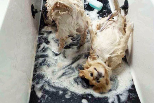 Scrubbers self serve dog wash in mi coupons to saveon special about us image 3 large solutioingenieria Images