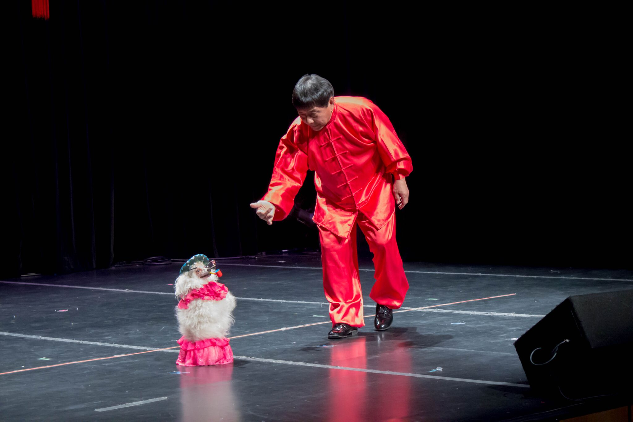 A dog trainer performed a show with his poodle, Hua Hua the Dancing Dog. Hua Hua exhibited multiple skits, including walking on two paws, and jumping through hoops the trainer held.  MANJU SHIVACHARAN/ THE STATESMAN