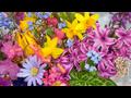 Flori-de-primavara-69_74082197509edd