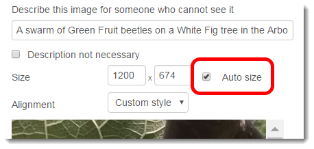 Click on the Auto size checkbox.