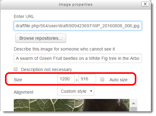 What if the image is larger than I desire? How can I change the display size?