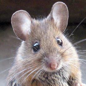 Det er ikke muligt at tilslutte en mus