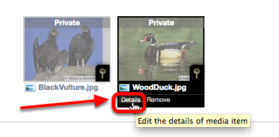 """To make """"private"""" media """"pubic"""" (viewable by all) click on Details, at the bottom of the thumbnail."""
